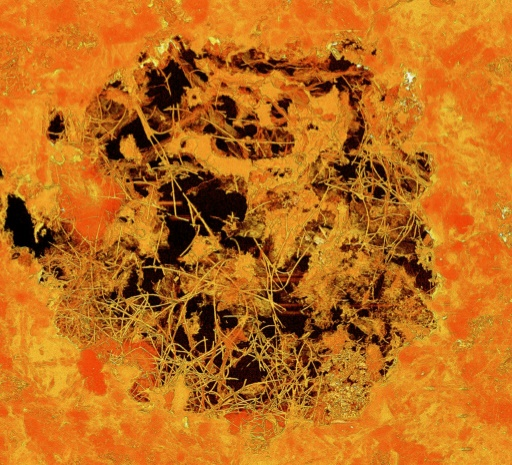 Fossils may be earliest known multicellular life: study