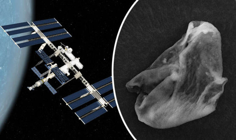 Scientists find 'PROOF' aliens exist as samples from ISS reveal something extraordinary