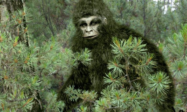 How the search for mythical monsters can help conservation in the real world