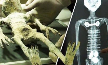 'Alien mummies' discovered in secret tomb in Peru [VIDEO]