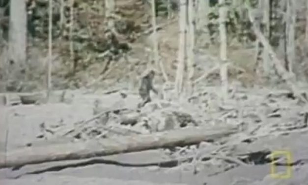 'Bigfoot' reportedly spotted in North Carolina forest