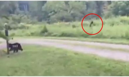 Police post video of 'Bigfoot' and warn not to take him down after reports of sightings