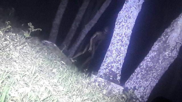 POLICE TOOK PICTURES OF AN ALIEN BEING IN ARGENTINA