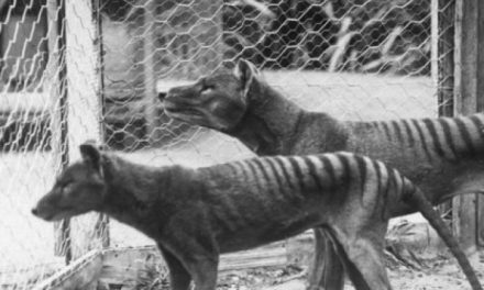 Why do some of us believe in Tassie tiger sightings and others don't?