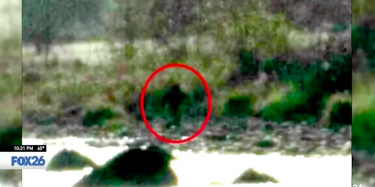 5 Bigfoot spotted on Californian orchard. Farmer mistook them for trespassers and shot