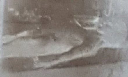 Is this a real alien? Latest on whether this is a still from REAL Roswell UFO footage