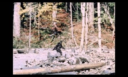 On the Plausibility of Another Bipedal Primate Species Existing in North America