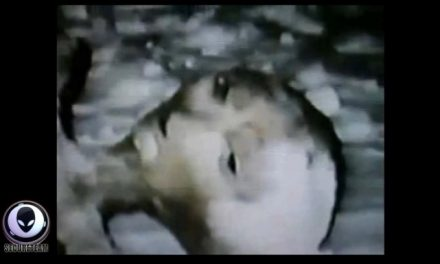 This SHOCKING 1992 footage may prove aliens are REAL [VIDEO]