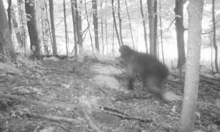13 of the Scariest Things Ever To Be Caught on Trail Cameras