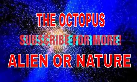 THE OCTOPUS…ALIEN OR NATURE?