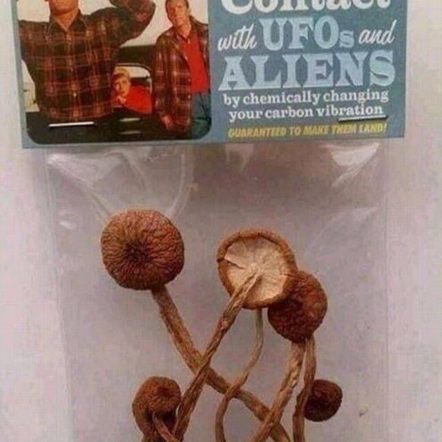 Contact UFOs & ALIENS starter kit. (I personally love liberty cap boomers)