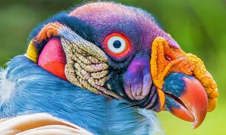 10 Birds That Look More Like Aliens Than Animals