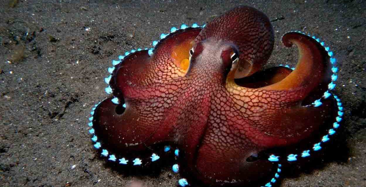 Scientific Theory Suggests Octopuses Are 'Aliens' And Came To Earth In 'Cryopreserved Eggs'  | Ancient Code