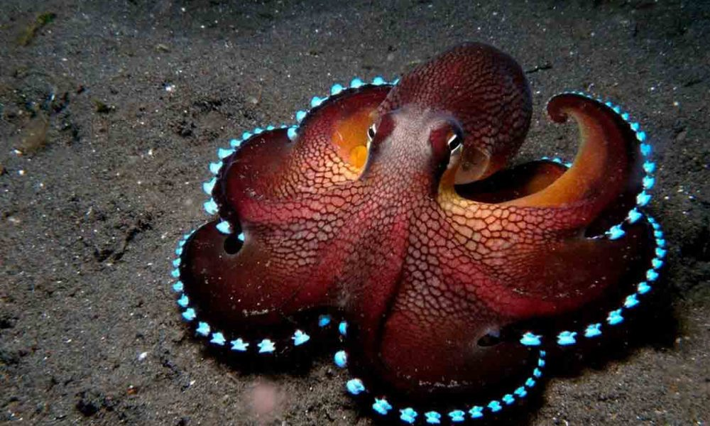 Scientific Theory Suggests Octopuses Are 'Aliens' And Came To Earth In 'Cryopreserved Eggs'