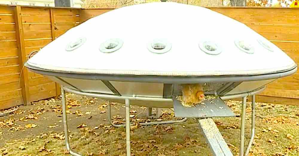 Couple Builds Fancy Chicken Coop Shaped Just Like a UFO and the Birds Love it