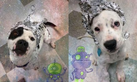 Shelter Shows Off The Cutest Little Area 51 'Aliens'