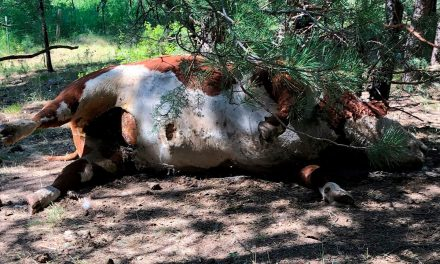 Oregon cow mutilations spark conspiracy theories: 'A lot of people lean toward the aliens'   Fox News