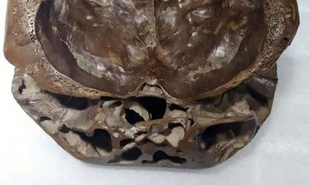 UFO hunter shares pictures of 'real-life ALIEN skull' with two separate 'layers' – Alien UFO Sightings