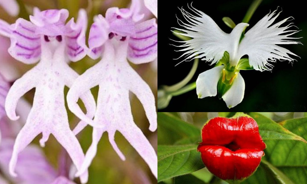 20 Extraordinary Flowers That Look Exactly Like Animals, Aliens, Fairies, and Other Strange Creatures